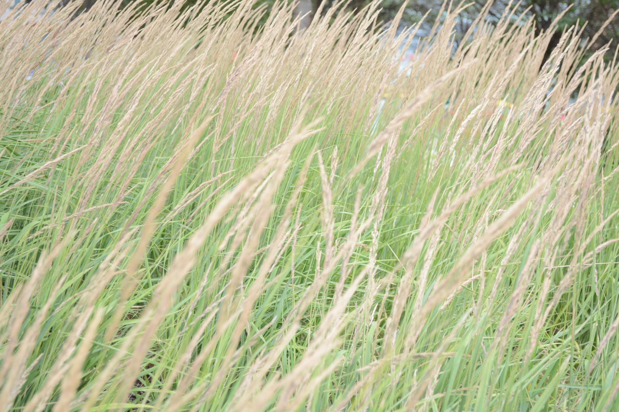 Unveiled_nature photo.jpg