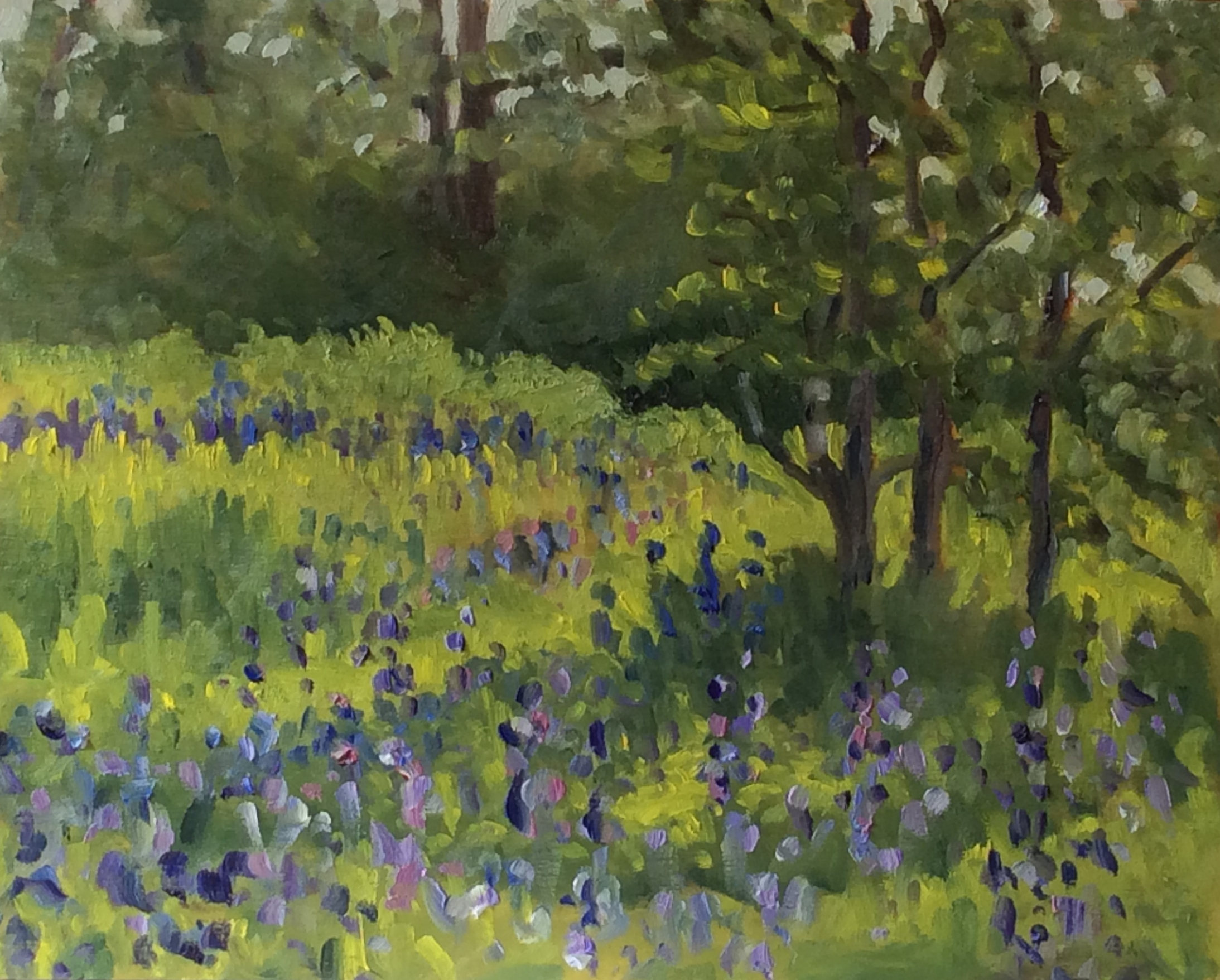 Camus Spring   Oil 8 x 10