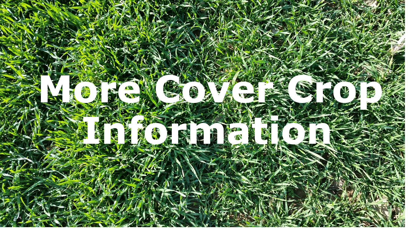 More Cover Crop Information