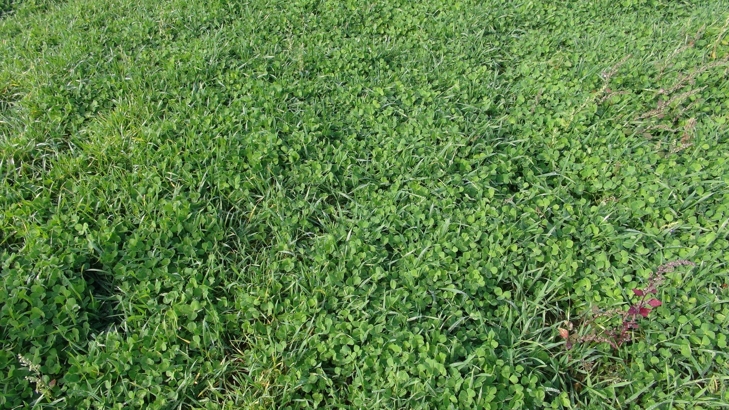 Cover Crop Example image