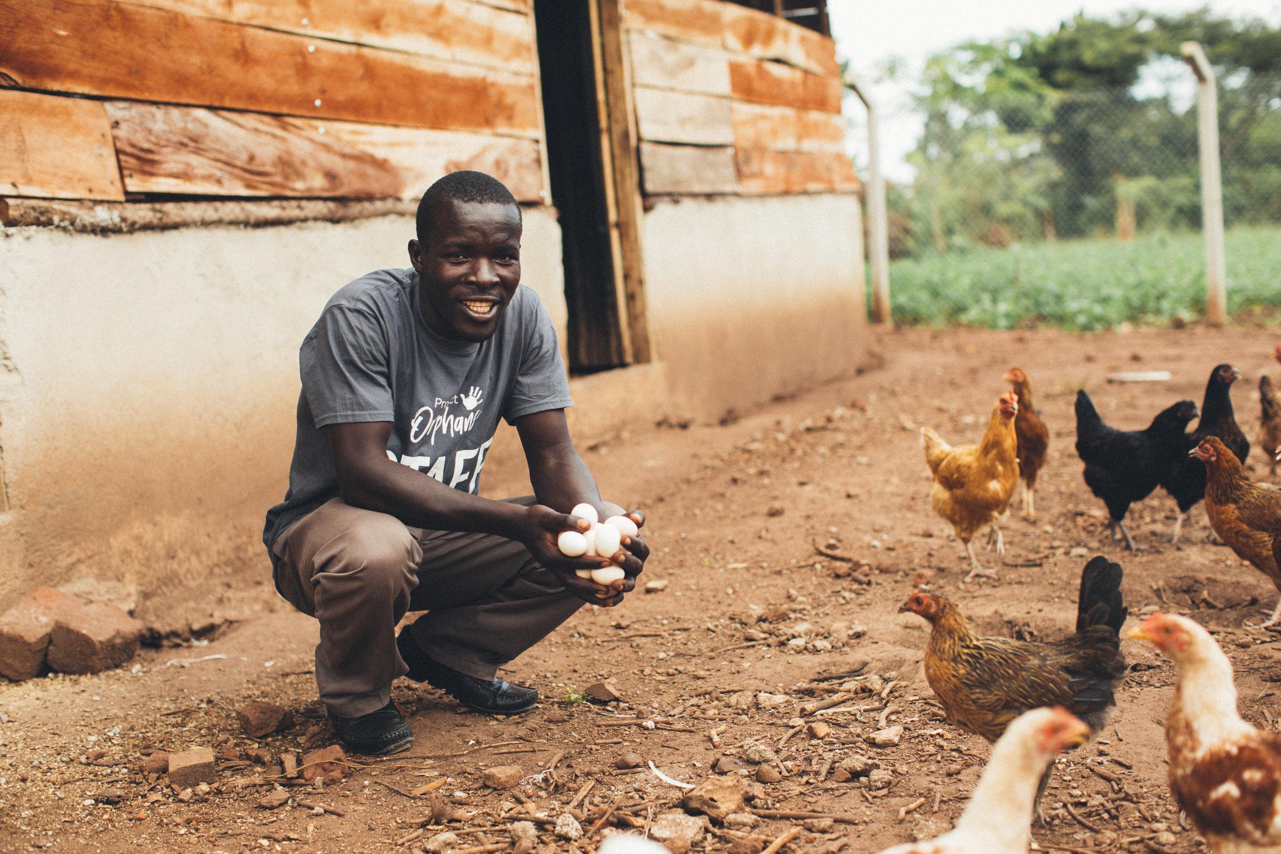 Poultry Uganda.jpg