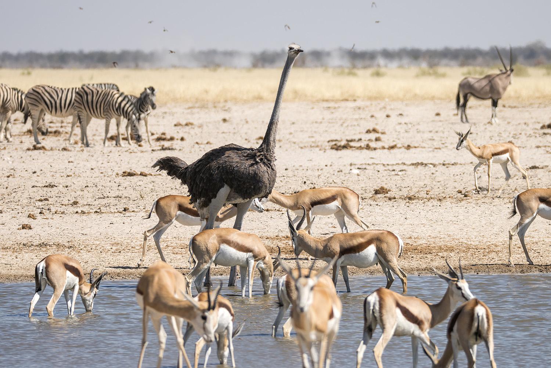 Etosha Milli Parkı'nda bir su kaynağı