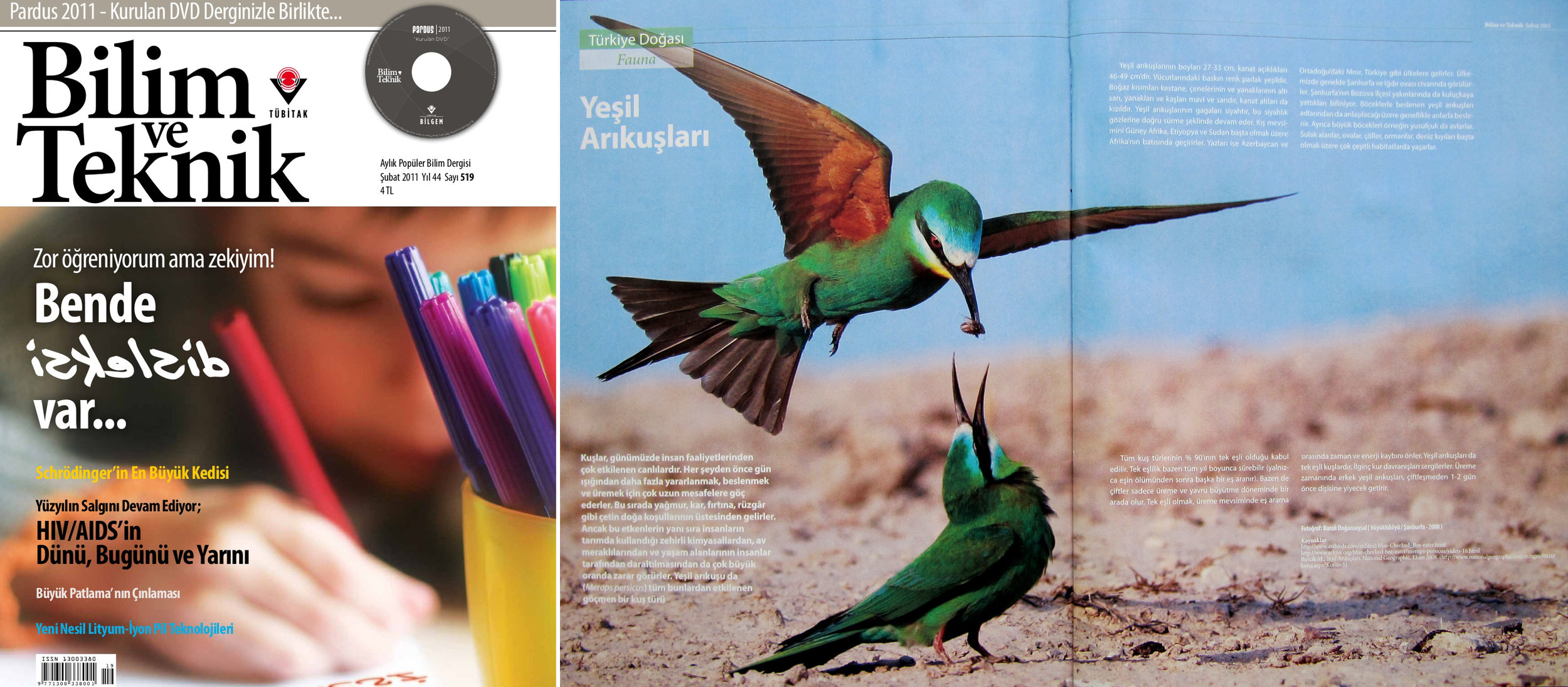 "Bilim ve Teknik Issue #519  [Science & Technology]  February 2011   ""Blue-cheeked Bee-eaters"" Photo by Burak Dogansoysal"