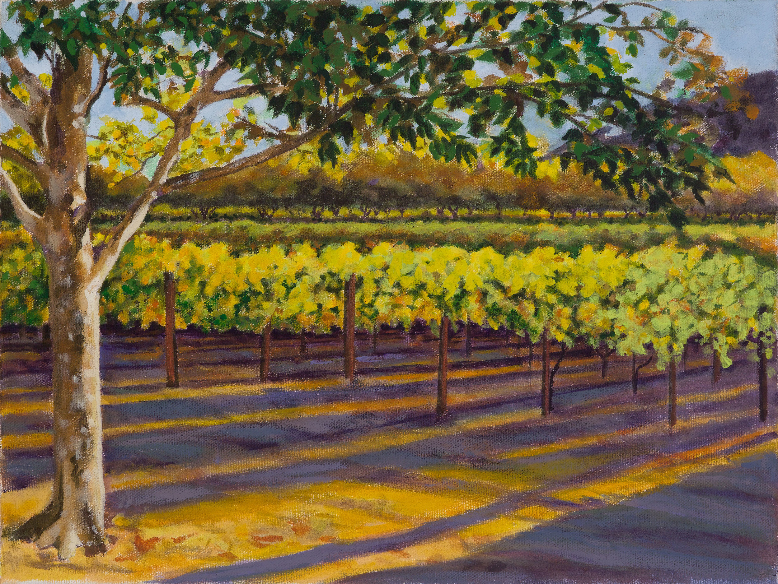 Napa-Valley-Vineyard-II.jpg