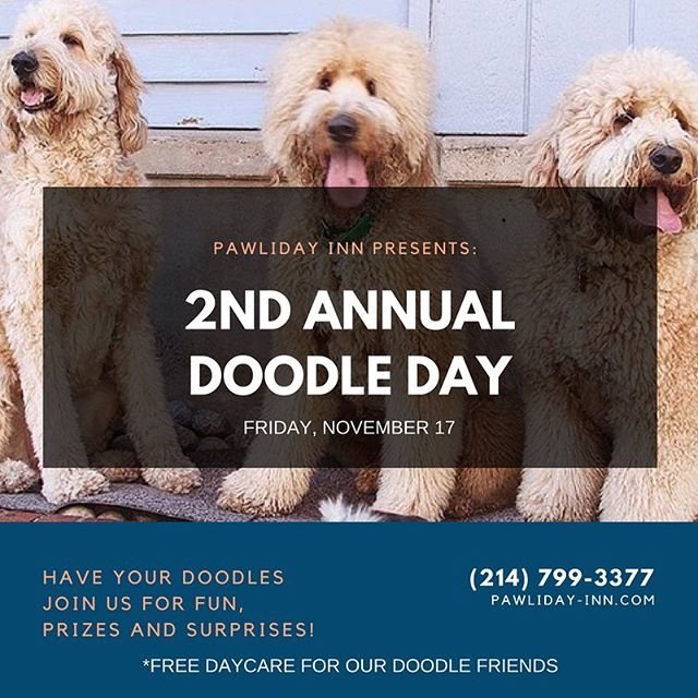 We are calling out every doodle out there to come and join us for a free day of daycare 🍻#pawlidayinn #pawlidaypups #2ndannualdoodleday