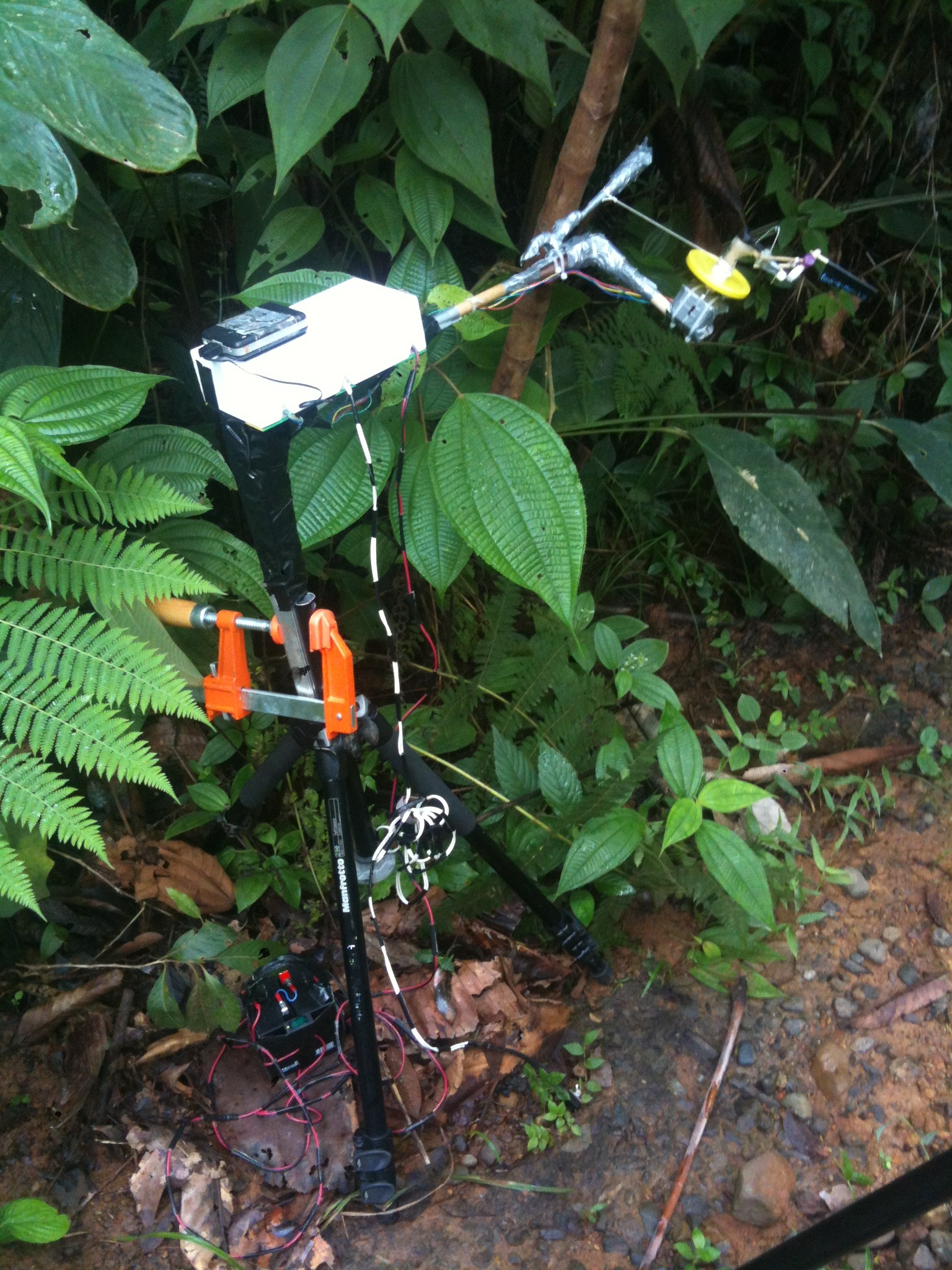 The Flick-o-matic 2.0 poised to flick a Cecropia tree