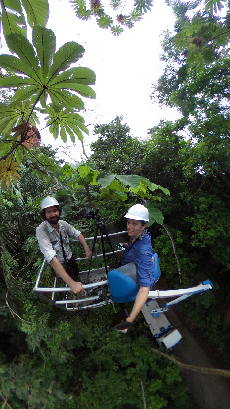 Measuring colony behavior in mature trees from the basket of a boom lift.
