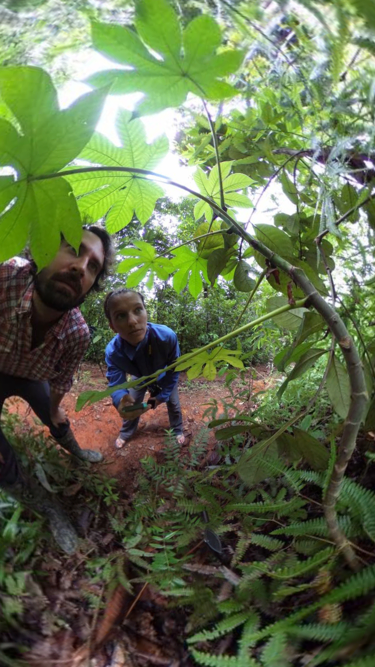 Crouching down to measure colony behavior in saplings.