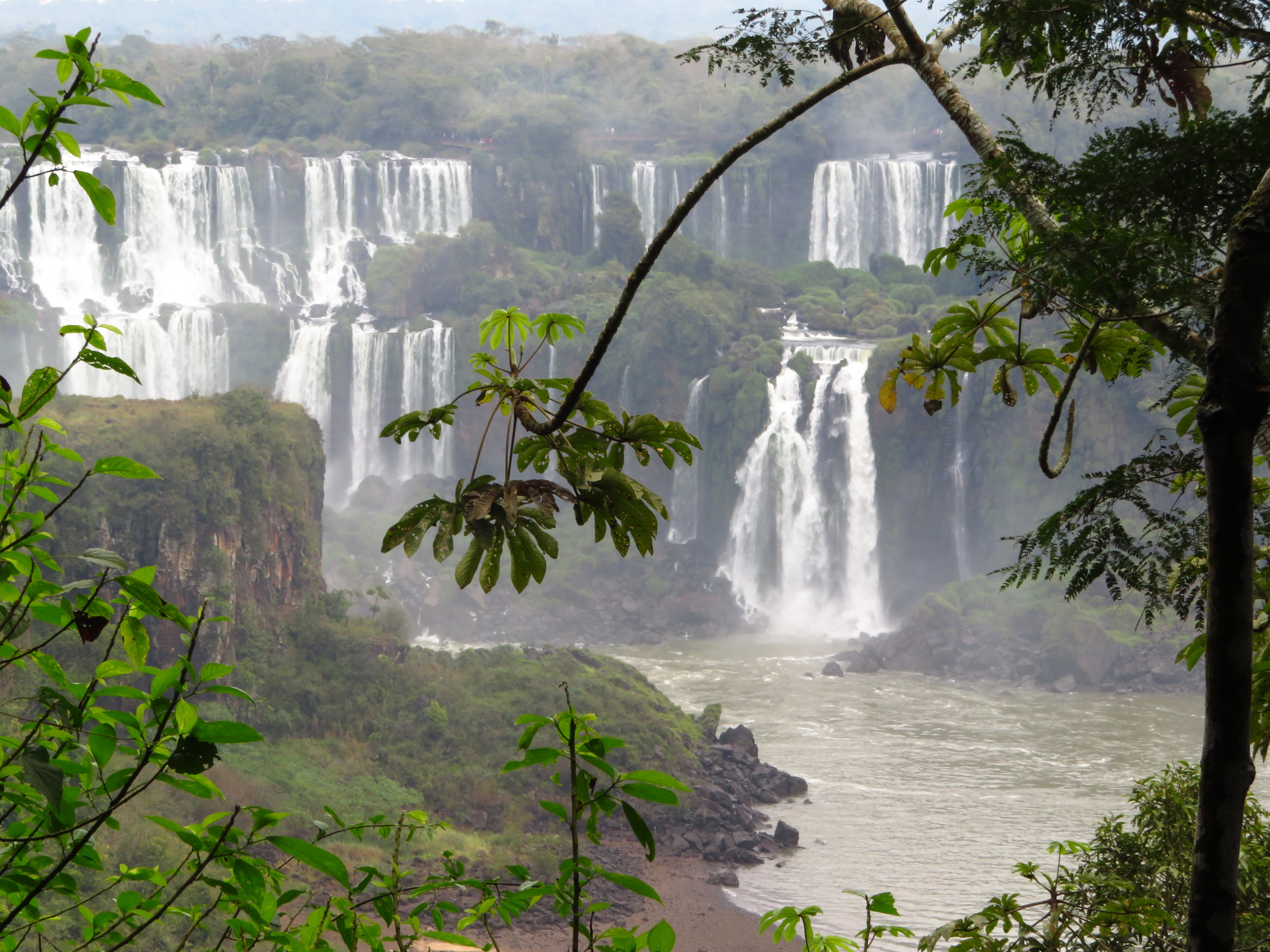 Cecropia trees line the banks of the Iguassu River as it pours over cliffs into the Atlantic Rainforest.