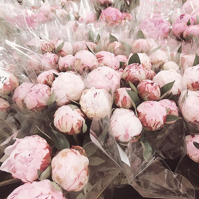 Not quite over peony season yet. Tbh is are we every going to be over peonies? 🌸