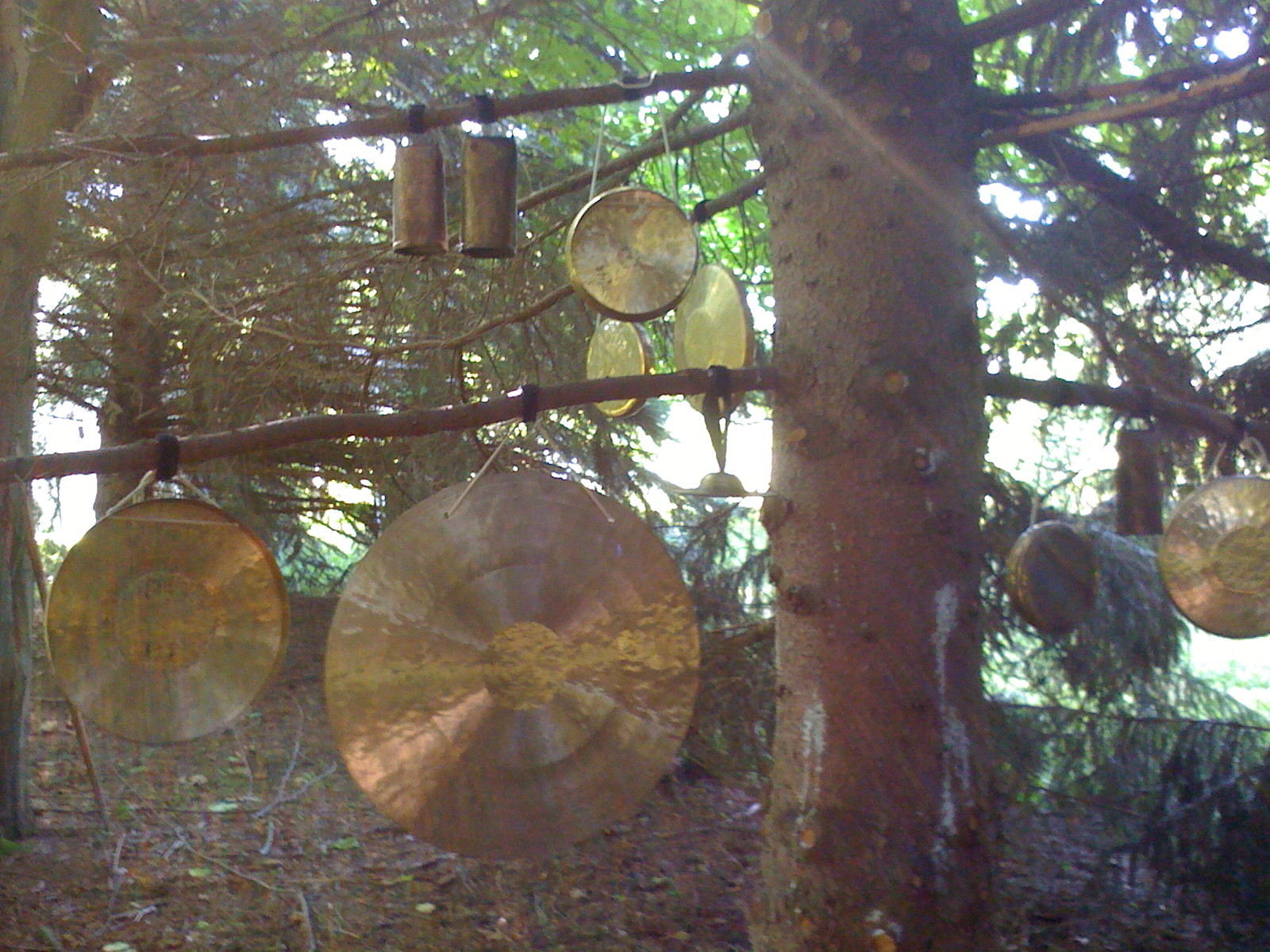 Gong trees for Grain of Sand film shoot, Ravenna, OH