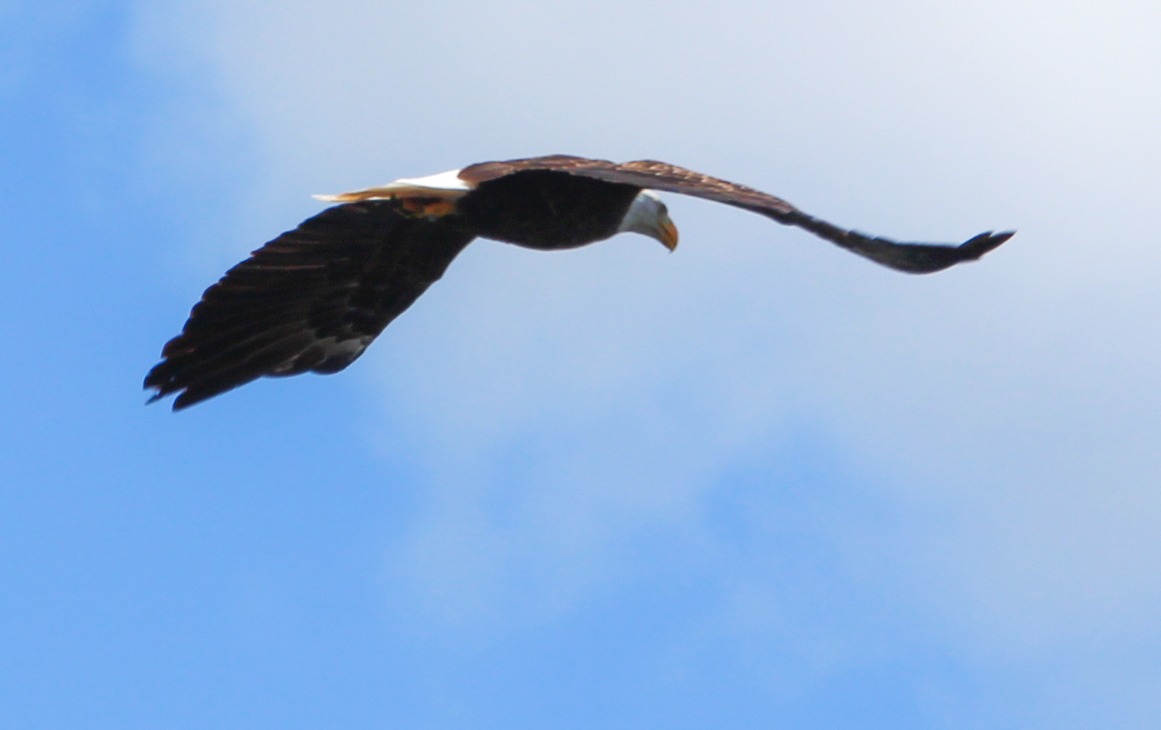 We caught another sight of our friend, Mr. Bald Eagle