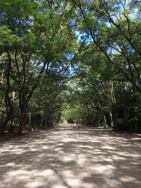 大きな樹の下を歩くのは、とても安心できます。そしてとても気持ちの良いおさんぽでした。