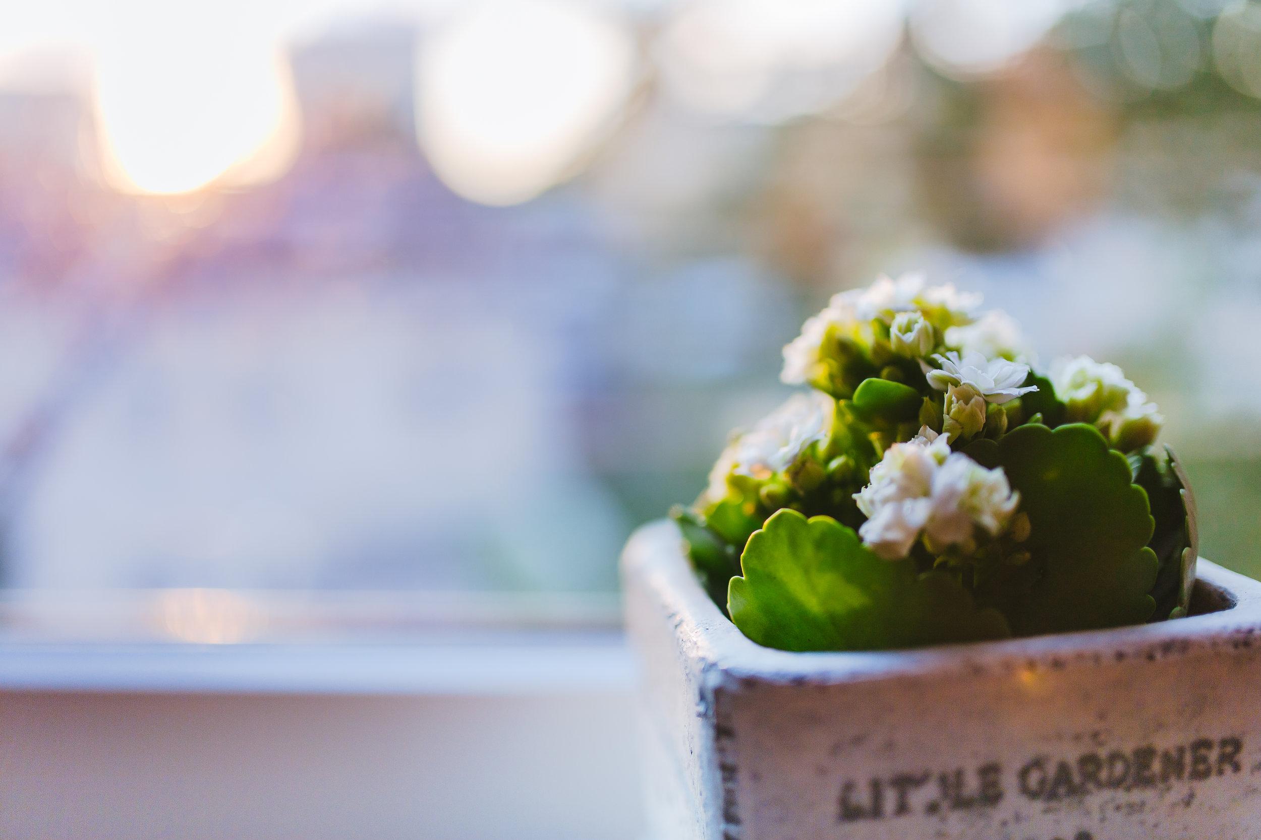 little-gardener-pot.jpg