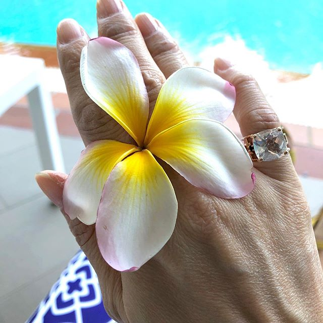 Plumeria - we were fortunate to catch the end of the season of this iconic tropical flower. This one that my son found for me is the tricolor version that I love.  #inspiration #plumeria #tomokoigarashijewelry