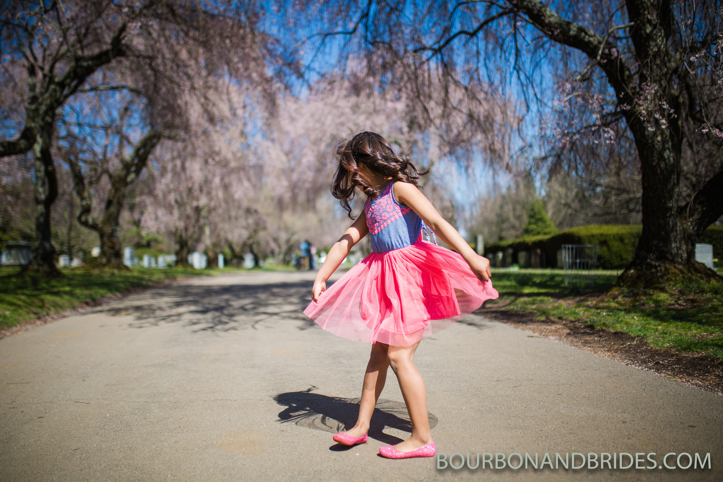 Lexington-spring-cherry-blossoms.jpg