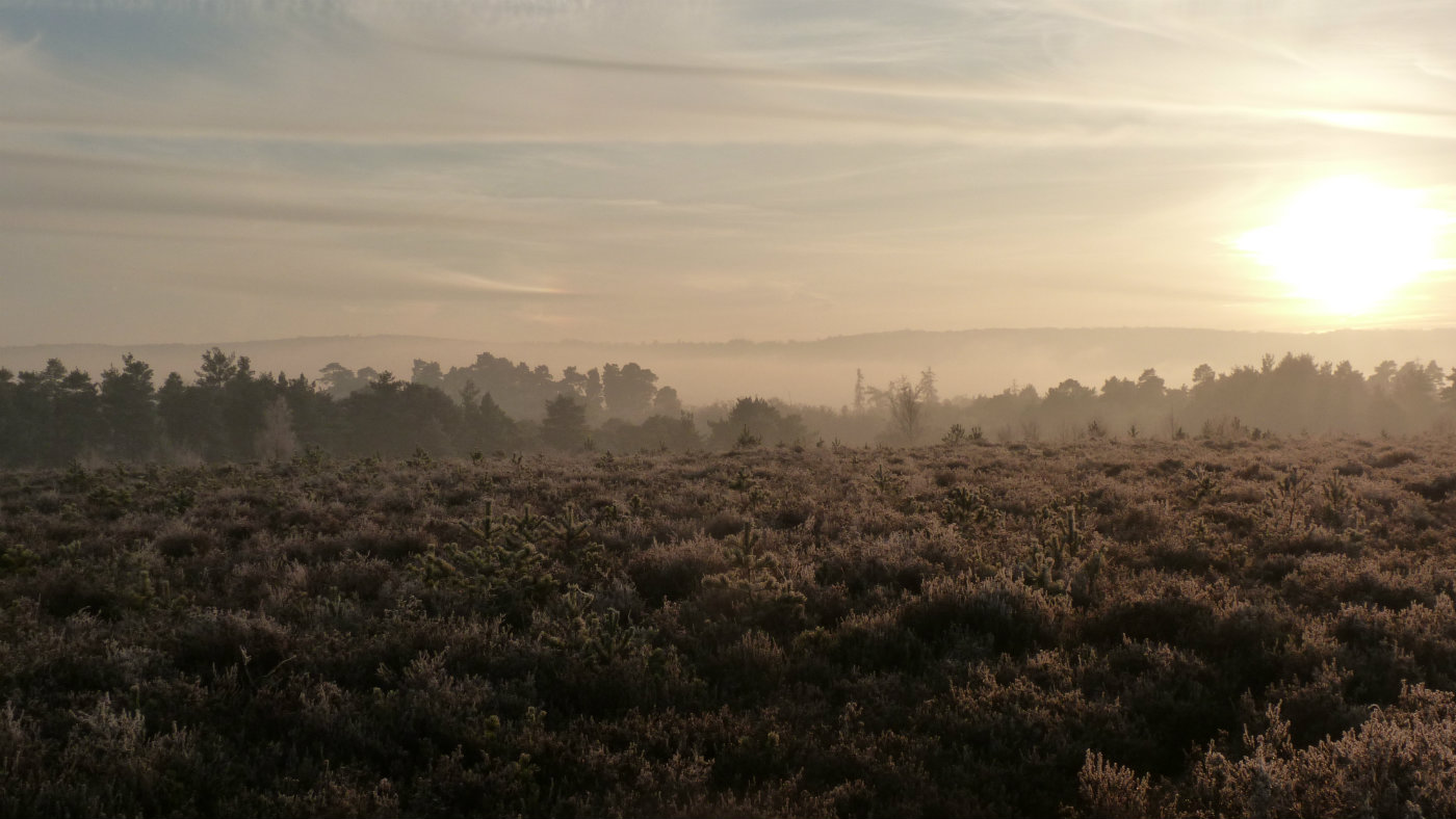 South Downs_Lavington Common_frost_1400x788.jpg