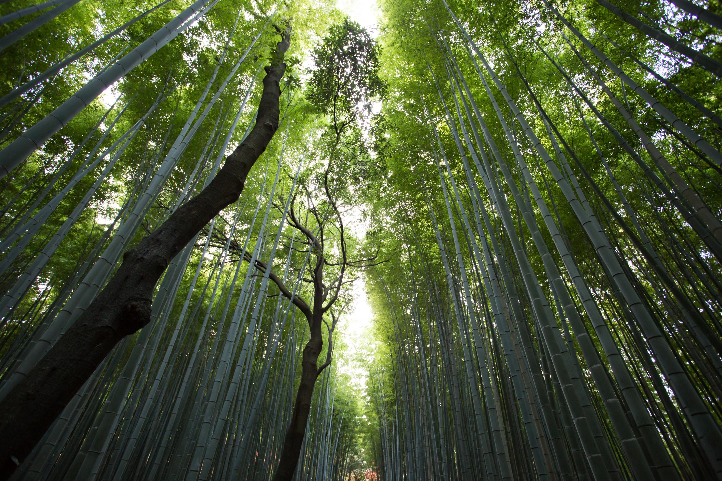 bambooforest.jpeg