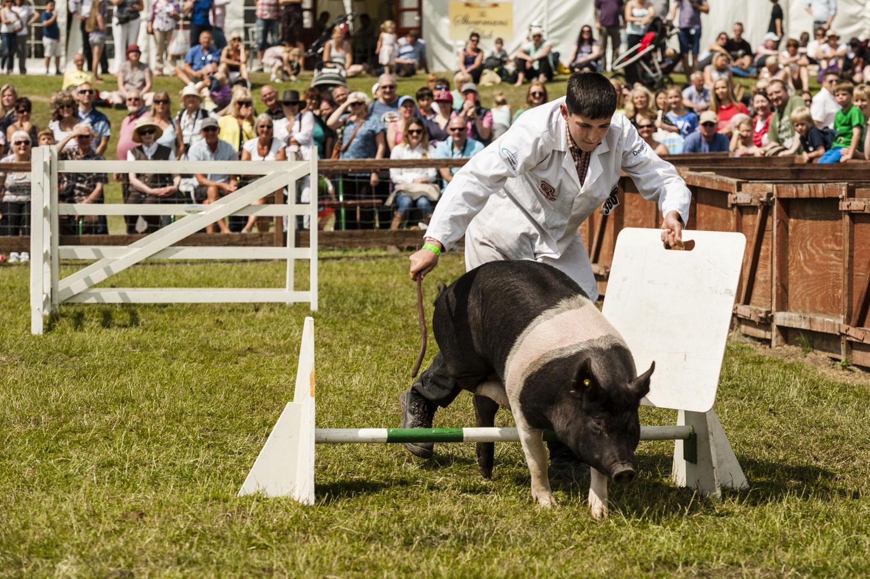 The Winning Pig
