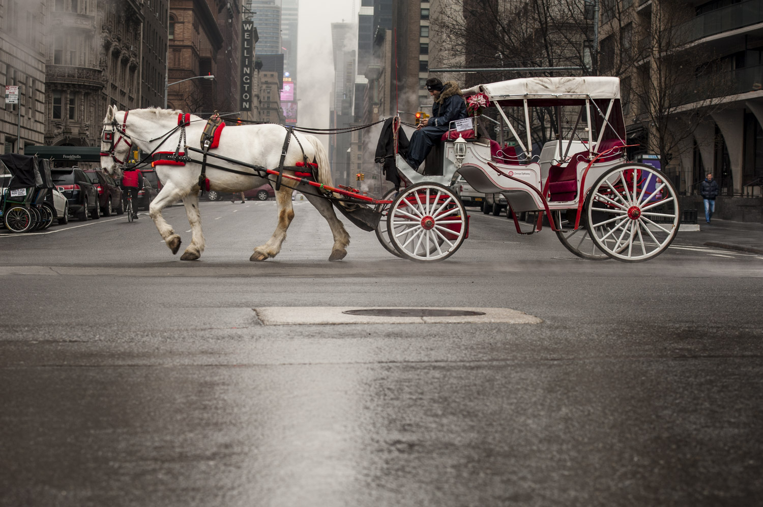 Carriage Horses of New York City