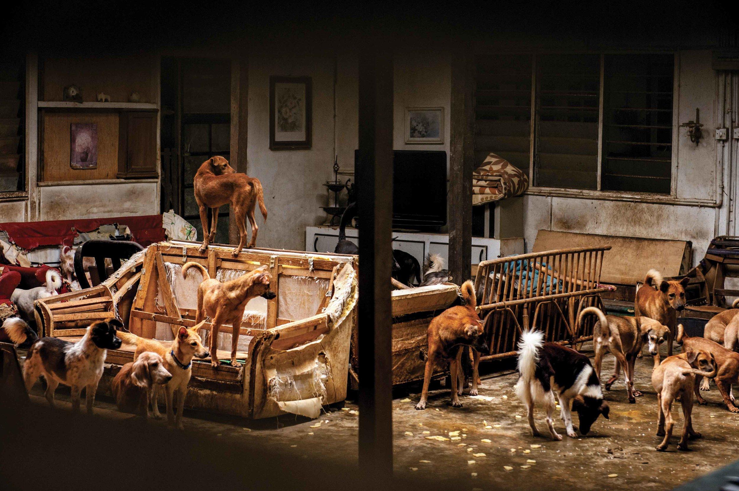 Hounds of Hope, Penang Animal Welfare Society, Malaysia