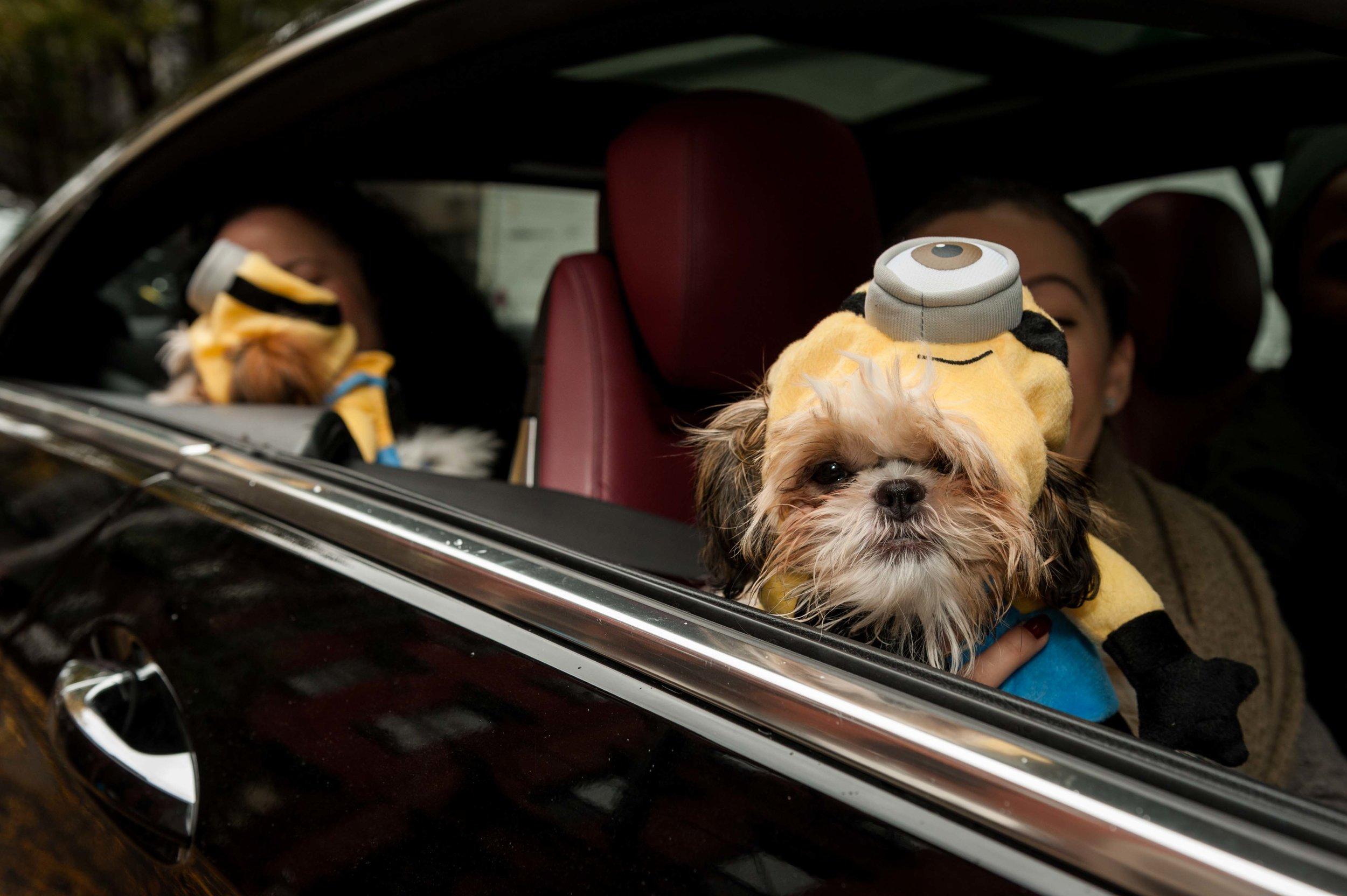 Halloween Dog Parade 2016, New York City