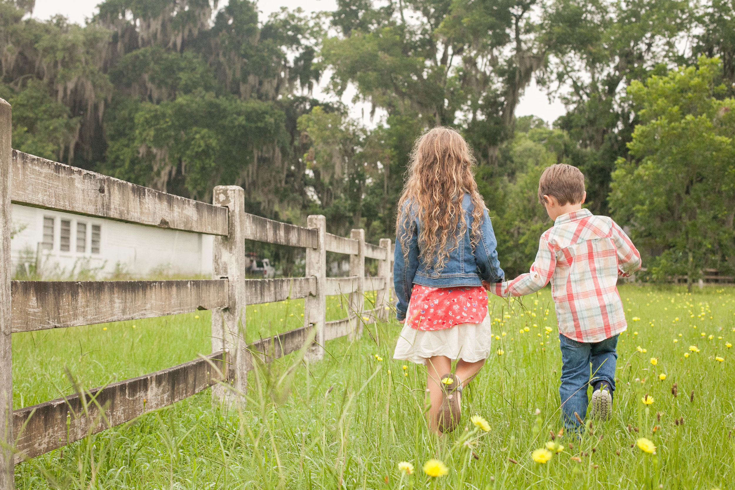 Siblings holding hands in field, laurie schultz photography