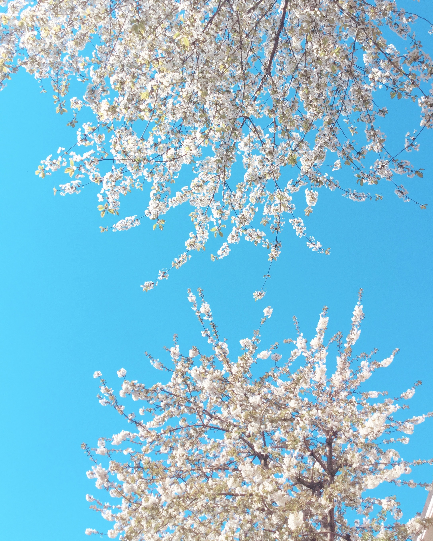 spring, london