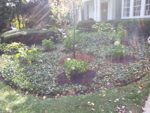 Garden Challenges 3