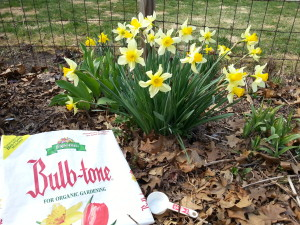BulbTone is only one of many options for bulb food