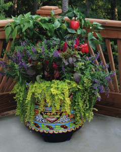 Annuals with green and red sweet peppers