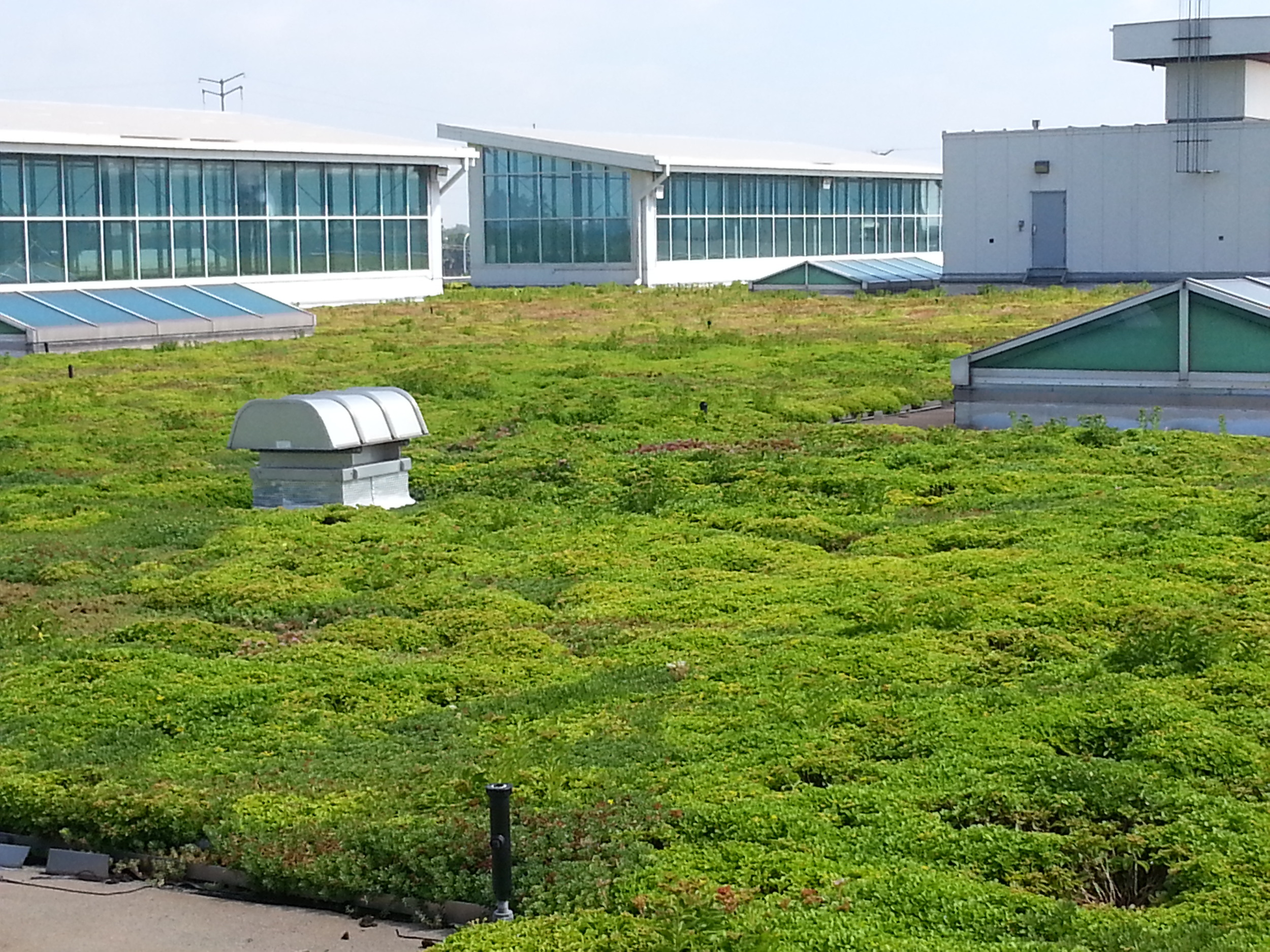The roof provides a habitat for birds and insects, produces oxygen to offset the factory's carbon dioxide emissions, and purifies rainwater.