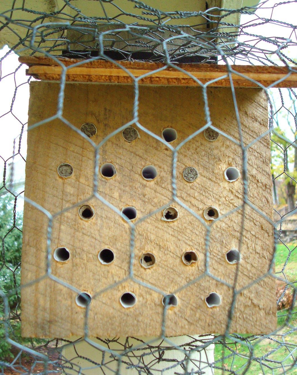 Bee Block 1.jpg