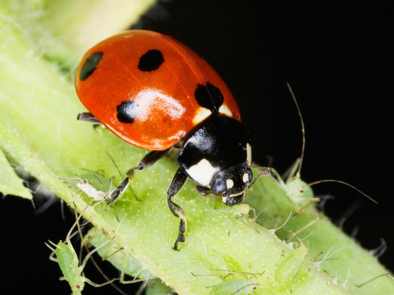 Ladybug dining.jpeg