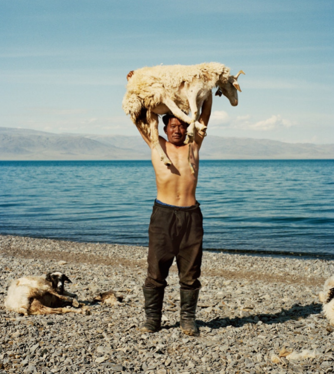A local herder shearing his sheep on the shores of Üüreg Lake (Үүрэг нуур) in western Mongolia.