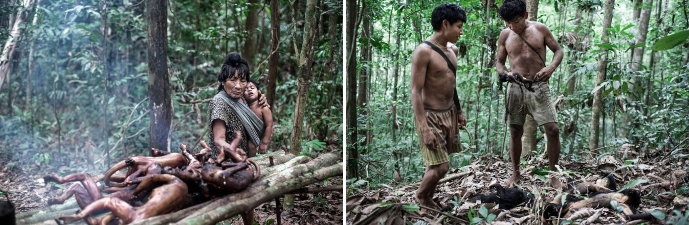 [1] Piramahã is the oldest man in the tribe. He is preparing his arrows for the next hunt, and later will prepare this fresh meat for the tribe's evening meal. [2] Awá often hunt the Guariba monkey and smoking the meat makes it last longer. [3] Young Awá during the hunt.