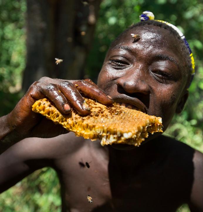 Above: Ngosha bites into a honeycomb full of larvae.