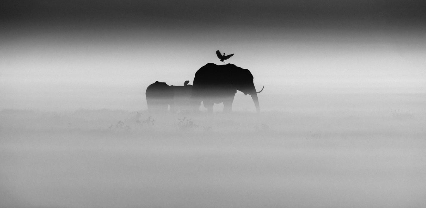 Above: Elephants and bird (2015)