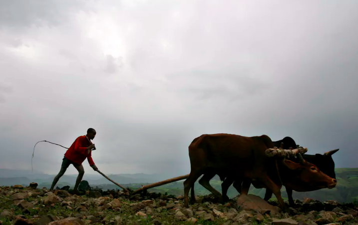 An Ethiopian farmer in the Amhara highlands outside the historic village of Lalibela. EPA/Stephen Morrison