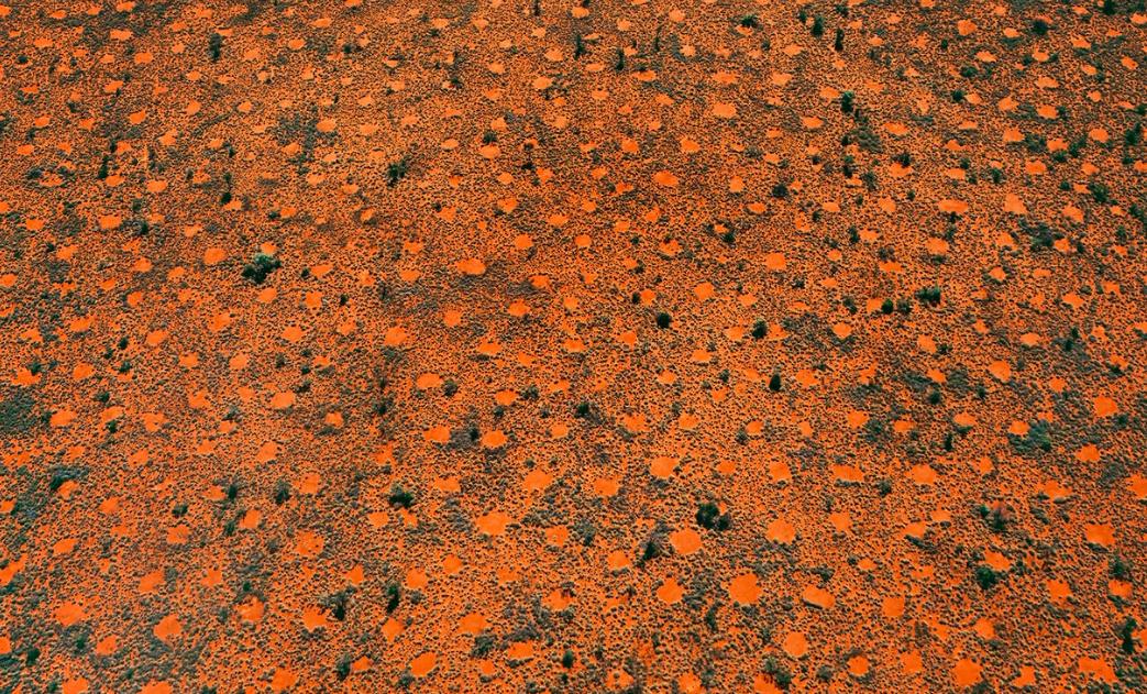 Ant clearings approx. 4–5 metres across, Great Sandy Desert, Pilbara, Western Australia. (Taken 2003)