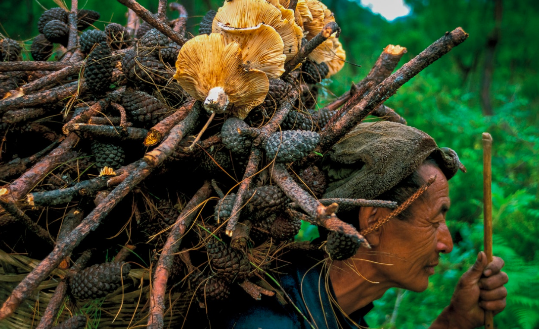 In northwestern Yunnan, each village has a sacred forest where the locals believe the gods reside, along with the spirits of their ancestors. People are not allowed to cut down trees, but they can collect fallen branches, mushrooms, and medicinal plants.    People's Republic of China
