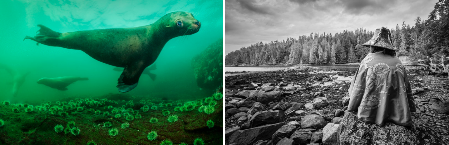 [1] A curious Stellar sea lion in the rich waters of the Salish Sea. [2] Molina Dawson, a young Musgamagw Dzawada'enuxw warrior, is occupying the polluting open-net fish farm that was placed in her people's ancestral territory without their consent.    Canada