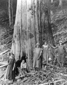 The family of James and Caroline Shelton poses by a large dead chestnut tree in Tremont Falls, Tennessee, circa 1920.  Great Smoky Mountains National Park Library ,  CC BY-SA