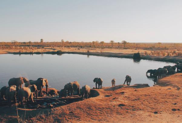 Photo of Zimbabwe's Hwange National Park by  Christine Donaldson  on  Unsplash .
