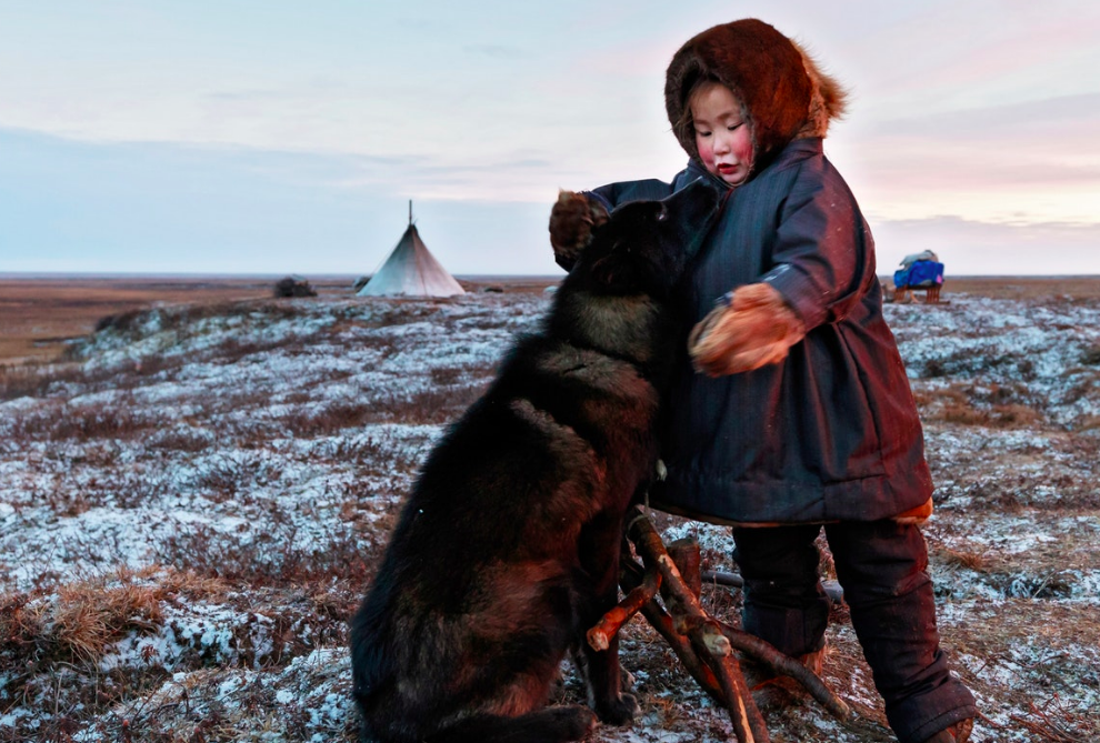 Although the family's dogs must work hard, and make an important contribution to the Nenets' ability to survive out on the tundra with their reindeer, they also provide affection and an occasional playmate for four-year-old Christina.