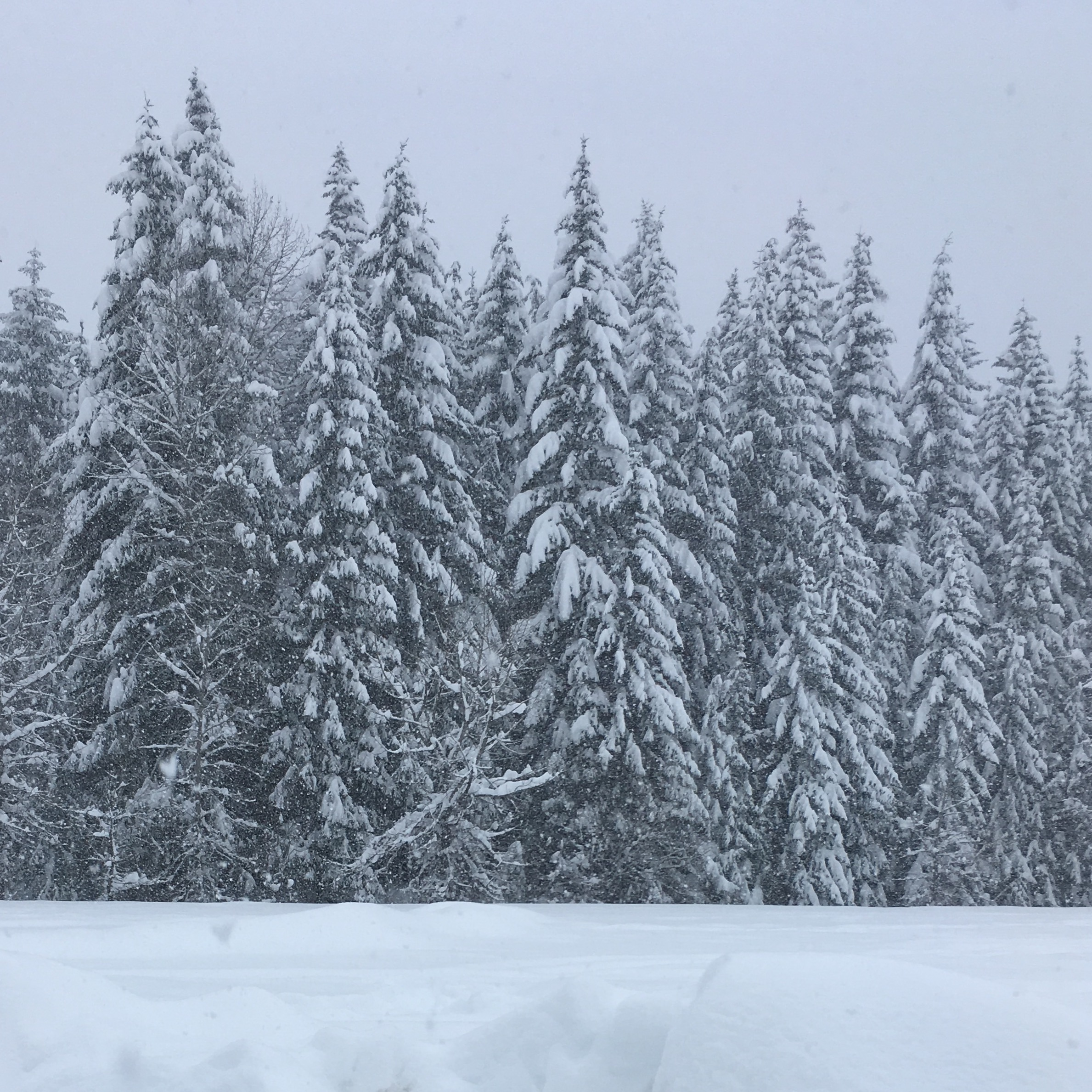 View from Cindy's Fraser's drive over Snoqualmie Pass, Washington!