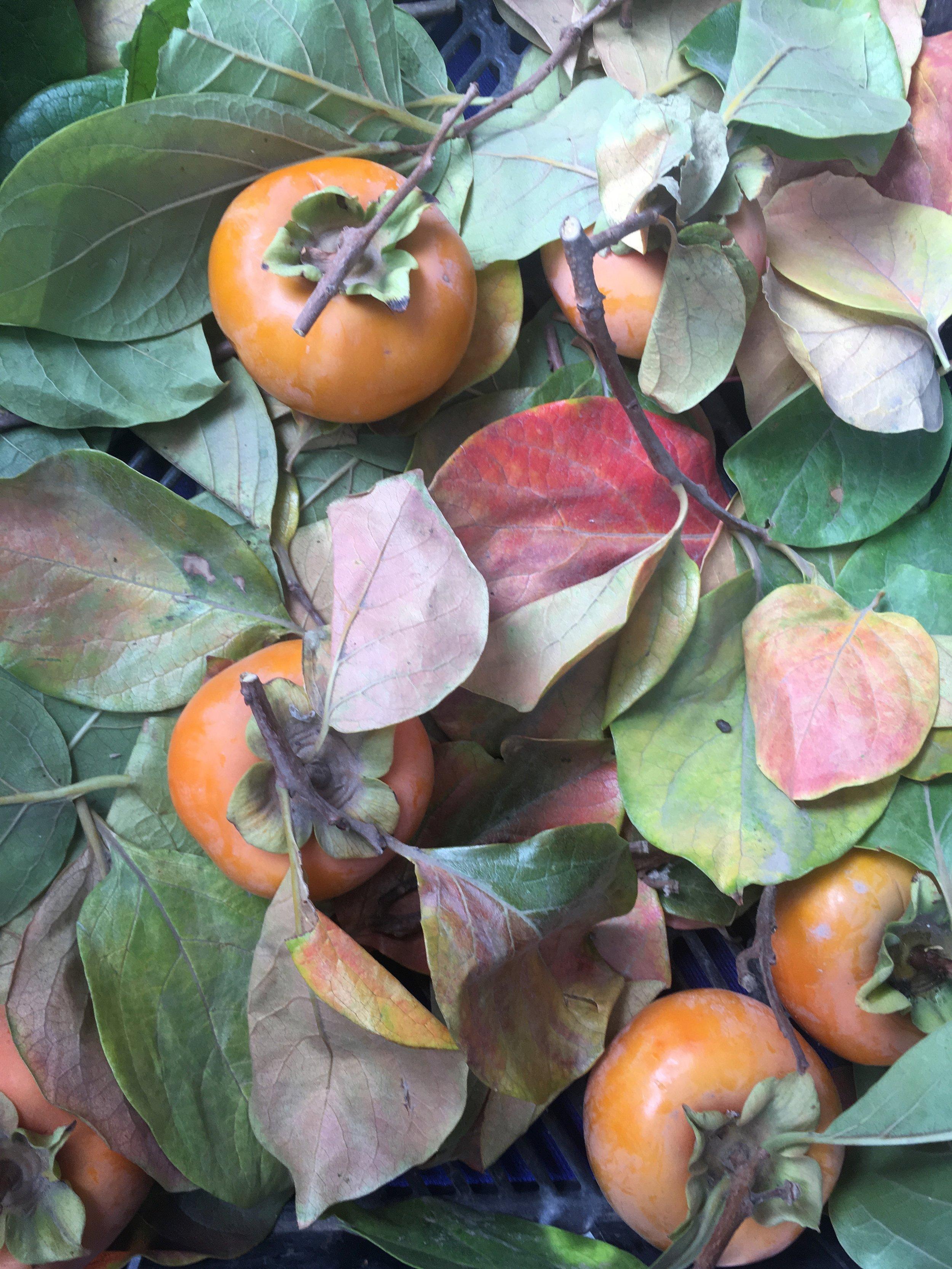 fallfruits.jpg
