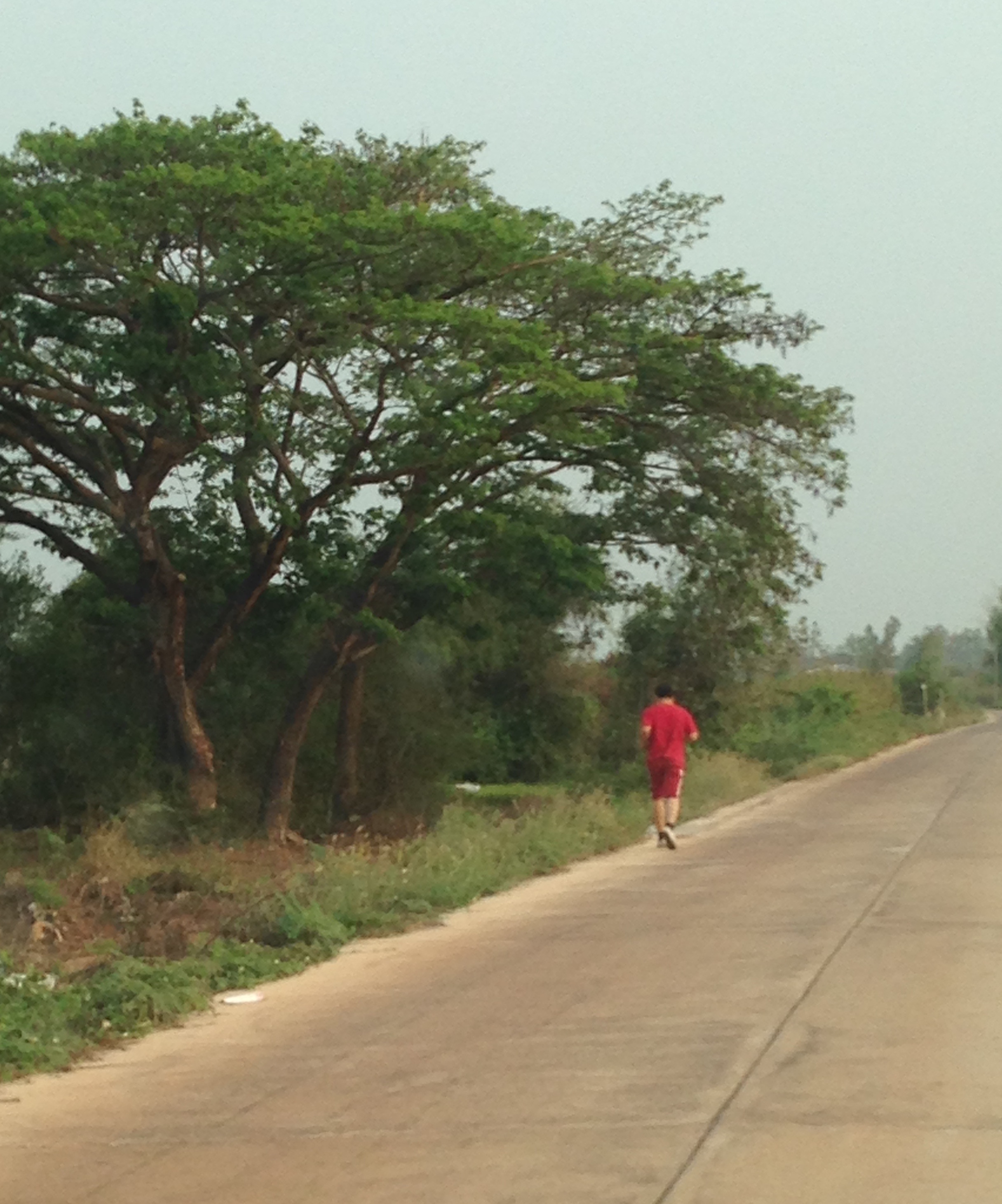 A fellow runner - a rare sight on the rural roads near our home. Next to my favorite tree.