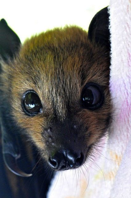 f294b056a2a2cb5cc89b0c0ec6ceb2aa--adorable-babies-adorable-animals.jpg