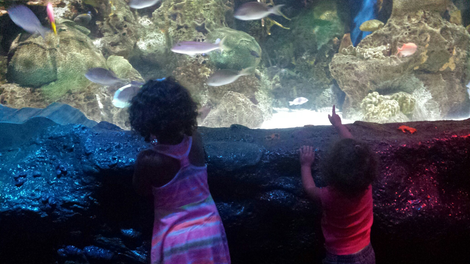 Picture of the week.   Demetra and Zoe at the aquarium. i love to imagine the wonder in their eyes.